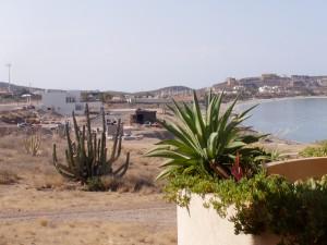 Cacti along the beach
